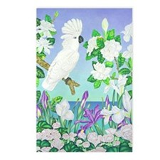 Cockatoo Iris Postcards (Package of 8)