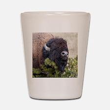 Christmas Bison Shot Glass