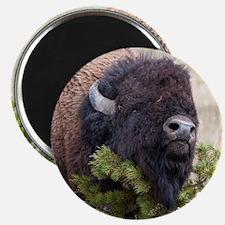 Christmas Bison Magnet