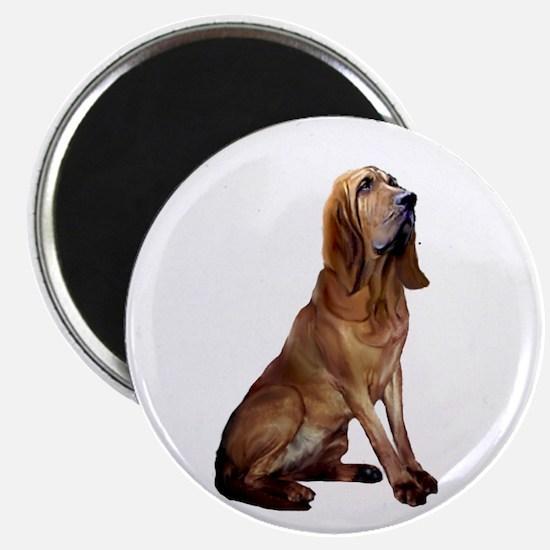 Bloodhound (sit) Magnet Magnets