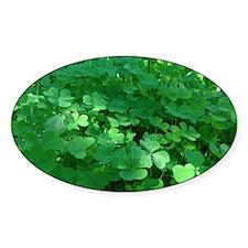 Cute 3 leaf clover Decal