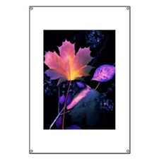 Autumn Leaves in Neon Banner