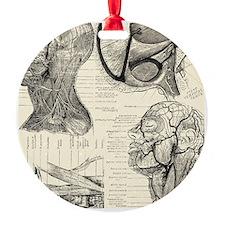 Anatomy Ornament