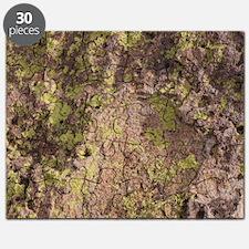 Lichen and Rock Puzzle