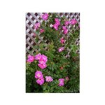 Roses and Trellis Rectangle Magnet