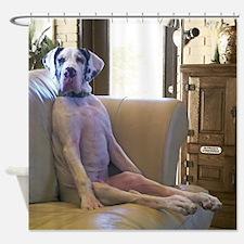 Famous Luigi Great Dane Shower Curtain
