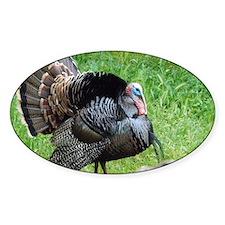 Cute Turkey Decal