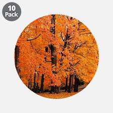 Autumn Trees 3.5&Quot; Button (10 Pack)