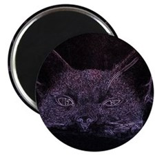 Black Cat Peeking Magnets