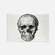 HUMAN SKULL ANATOMY Rectangle Magnet