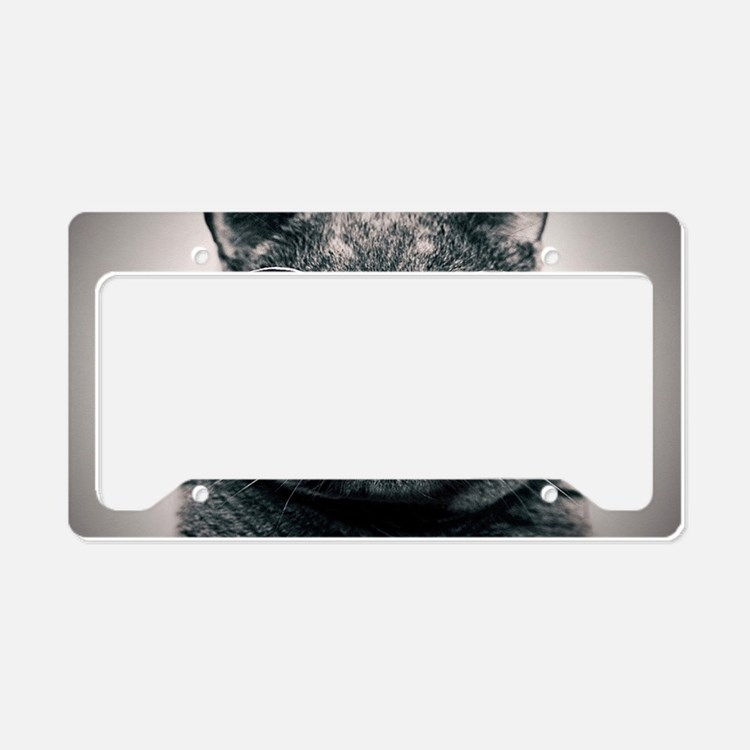 Cool Cat-Galaxy License Plate Holder
