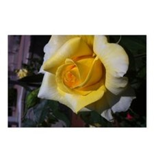 Yellow Rose - Friendship Postcards (Package of 8)