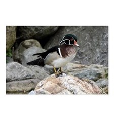 Wood Duck Postcards (Package of 8)