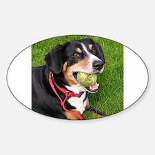 entlebucher mountain dog w ball Decal
