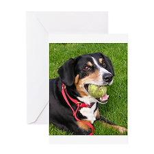 entlebucher mountain dog w ball Greeting Cards