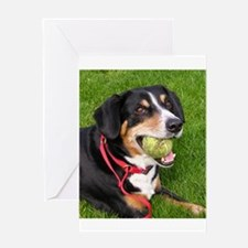 entlebucher mountain dog w ball Greeting Cards