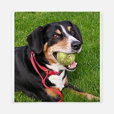 entlebucher mountain dog w ball Queen Duvet