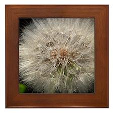 Wishing Flower Framed Tile