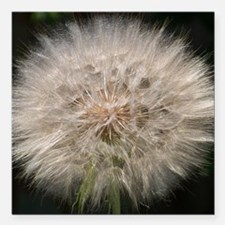 """Gone to Seed Square Car Magnet 3"""" x 3"""""""