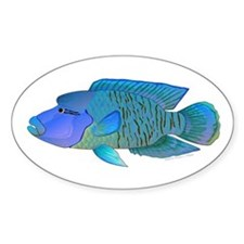 Humphead Wrasse Decal