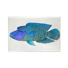 Humphead Wrasse Magnets