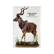 Greater Kudu Rectangle Magnet