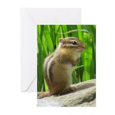 Chipmunk Greeting Cards