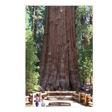 Sequoia with Girls Postcards (Package of 8)