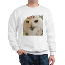 Snowy Owl Close-Up Sweatshirt