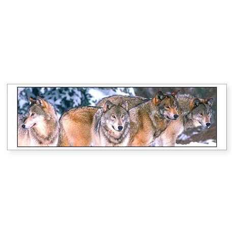 4 Wolves Bumper Sticker
