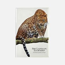 Sri Lankan Leopard Rectangle Magnet