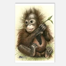 Orangutan Baby With Postcards (package Of 8)