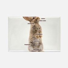 Bunny Bits Magnets