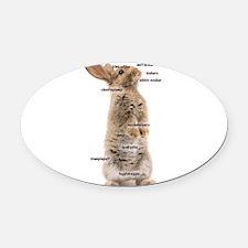 Bunny Bits Oval Car Magnet