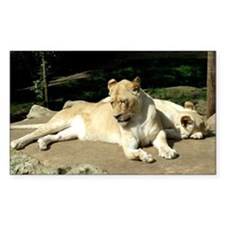 White Lioness and Cub Decal