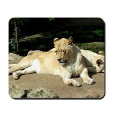 White Lioness and Cub Mousepad