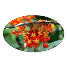 Butterfly 4 Decal