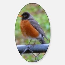 Fluffy Robin Sticker (Oval)