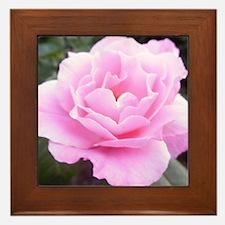 Pink Rose Framed Tile