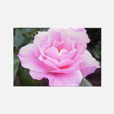 Pink Rose Rectangle Magnet