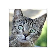 "Cute Gray and white cat Square Sticker 3"" x 3"""