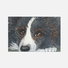 Thoughtful Border Collie dog Magnets