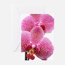 Phalaenopsis orchids Greeting Cards