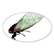 Cicada Oval Decal