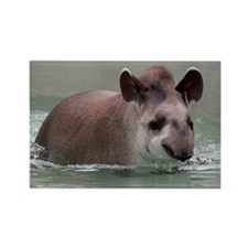 Cute Tapir Rectangle Magnet