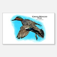 Green-Winged Teal Decal