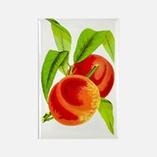 Peach  Rectangle Magnet