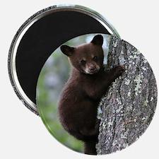 Bear Cub Climbing a Tree Magnet