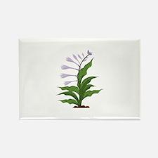 Flowering Hosta Magnets