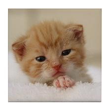 Newborn kitten Tile Coaster